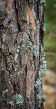 Lichen growing on tree bark Stock Photo