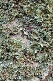 A LICHEN LANDSCAPE 04 stock image