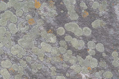 Lichen. S and moss on a wet rock Stock Photo
