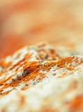 Lichen. A lichens on the rock in detail stock photography