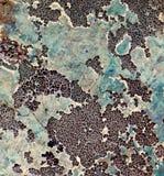 Lichen make a pattern on a rock face Stock Image