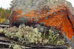 Lichen and mold Royalty Free Stock Photography