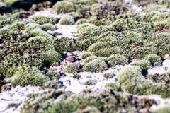 Lichen Moss auf Beton in der Natur Stockfotos