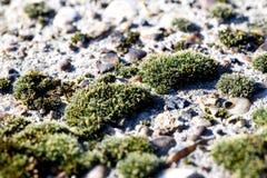 Lichen Moss auf Beton in der Natur Lizenzfreie Stockbilder