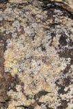 Lichen and moss Stock Photo