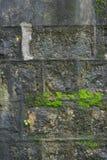 Lichen Moss. Background Lichen Moss stone wall Stock Photos