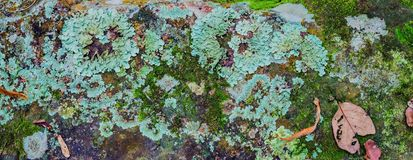 Lichen and moss-covered stone Royalty Free Stock Photo