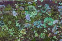 Lichen and moss-covered stone Royalty Free Stock Photos