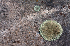 Lichen moss on granite stone background Stock Photography