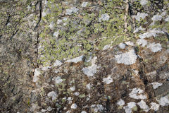 Lichen and moss grow on rock Stock Photo