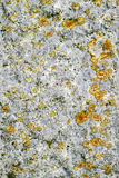 Lichen and moss growing on granite stone. Stock Photography