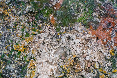 Lichen and moss growing on gray stone Royalty Free Stock Photos