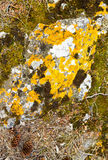 Lichen and moss on rock Stock Photography