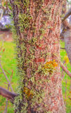 Lichen and moss on stem of tree. Vertical photo, photo took in lake New Zealand, photo is usable on picture post card, calendar, gardening Stock Image