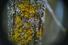 Cups of lichen and moss stock photos