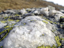Lichen on mountain rocks view Royalty Free Stock Images