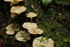 Lichen mushrooms Royalty Free Stock Photography