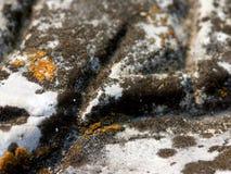 Lichen noir Photographie stock libre de droits