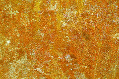 Lichen on old cement wall Stock Photos