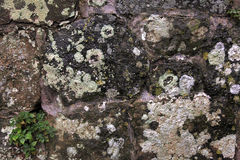 Lichen on old stone Royalty Free Stock Photography
