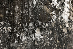 Lichen on the old wall royalty free stock images