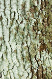 Lichen On A Trunk Stock Image