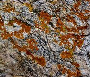 Lichen orange sur le granit photographie stock libre de droits