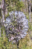Lichen in the original form of a circle Stock Photography