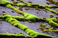 Lichen over roof of home Royalty Free Stock Images