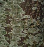 Lichen Pattern verde imagens de stock royalty free