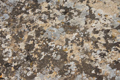 Lichen patterns Stock Photos