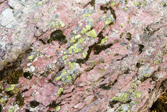 Lichen on pink rock Stock Images