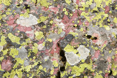 Lichen on pink rock. Macro view of colorful lichen on exposed rock in Glacier National Park Royalty Free Stock Photography