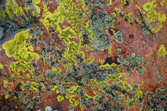 Lichen on Rock. Green lichen on red granite called moss rock in New Mexico used for decorative landscaping Royalty Free Stock Photos