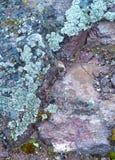 Lichen on rock. Royalty Free Stock Photo