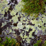 Lichen on rock Stock Photos