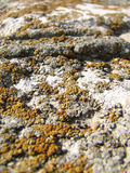 Lichen on rock stock photo