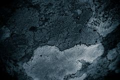 Lichen on rock abstract background/ Abstract backdrop of lichen and stone / Rough texture background. / Black textured background Royalty Free Stock Images