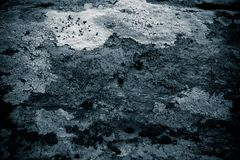 Lichen on rock abstract background/ Abstract backdrop of lichen and stone / Rough texture background. / Black textured background Stock Photo