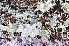 Lichen on a rock stock photos