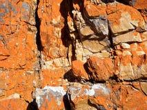 Lichen rock background Stock Photo