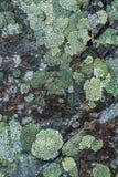 Lichen on a rock Stock Photos