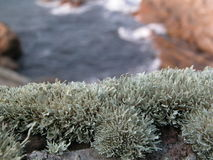 Lichen on the rock. Lichen growing on the rock normally wet winter Royalty Free Stock Images