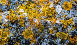 Lichen on rock. Close up view stock images