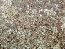 Lichen Rock - Moss Rock arkivfoton