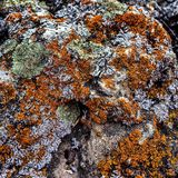 Lichen on a rock. Nice detailed lichen covering a rock Royalty Free Stock Photos