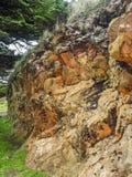 Lichen on rock Stock Photos