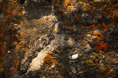 Lichen On Rock. Orange and Yellow Royalty Free Stock Images