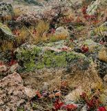 Lichen on Rock and Red Brush. In Colorado mountain wilderness stock images