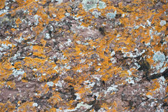 Lichen on the rock Royalty Free Stock Image